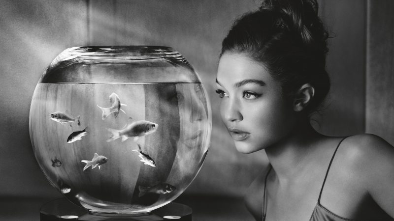 gigi hadid guarda acquario