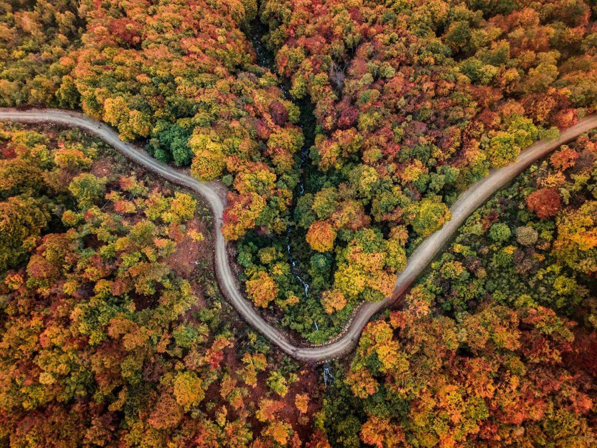 verde alberi strada
