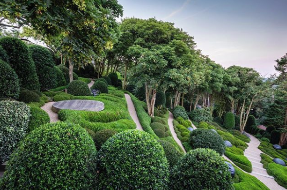 alberi verde