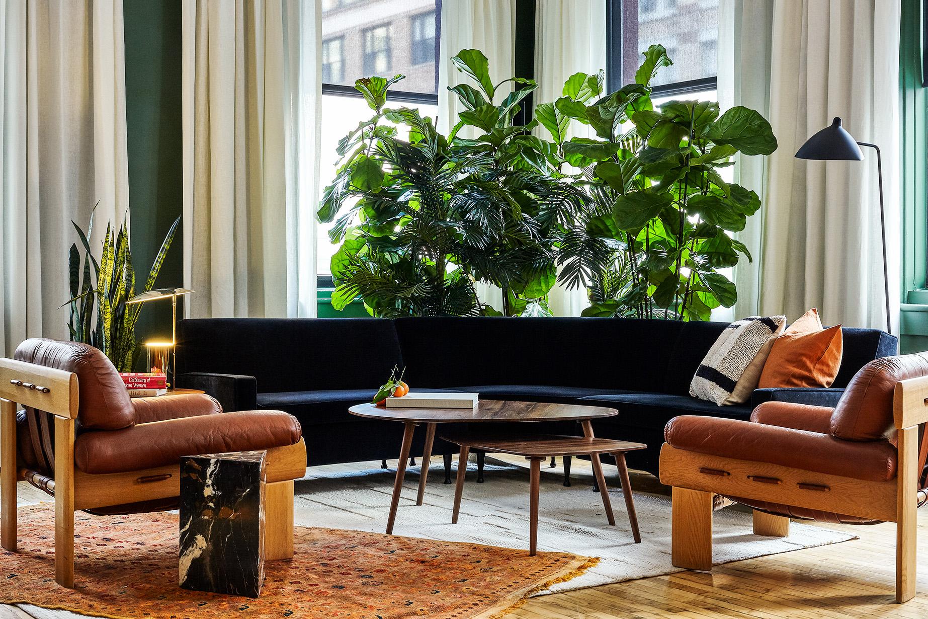 piante sedie tappeti
