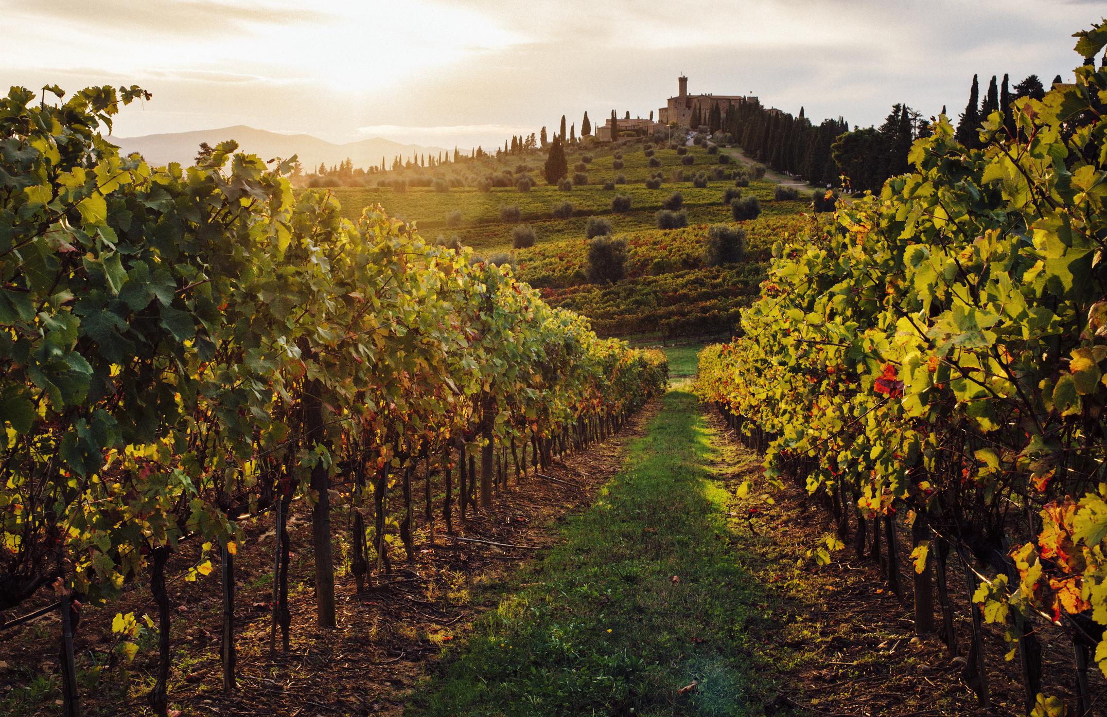 Vini italiani: i vigneti in Toscana
