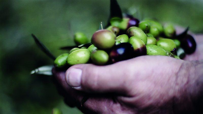foto olive