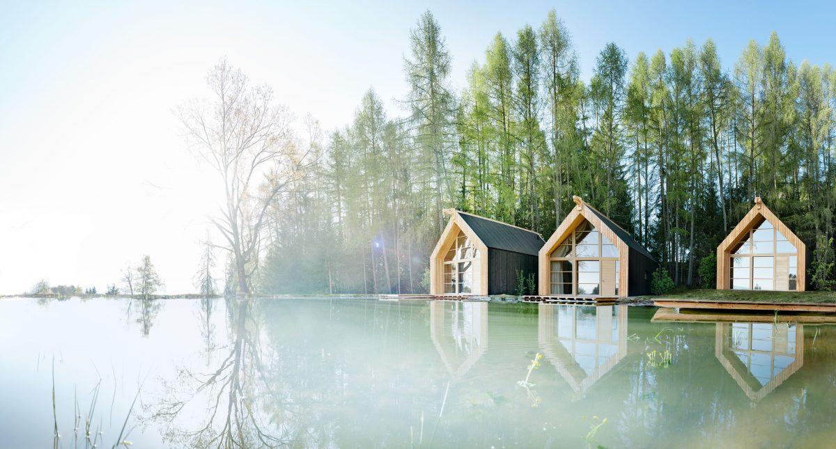 bosco legno cielo