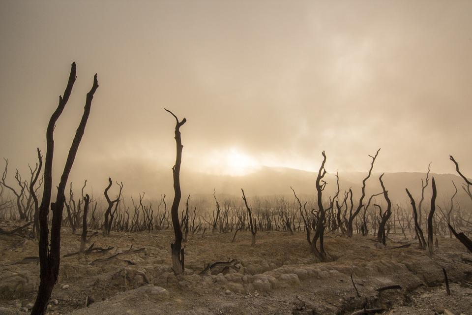 Cambiamenti climatici: servono 1.800 miliardi per adattarsi. E per guadagnarne altri 7mila