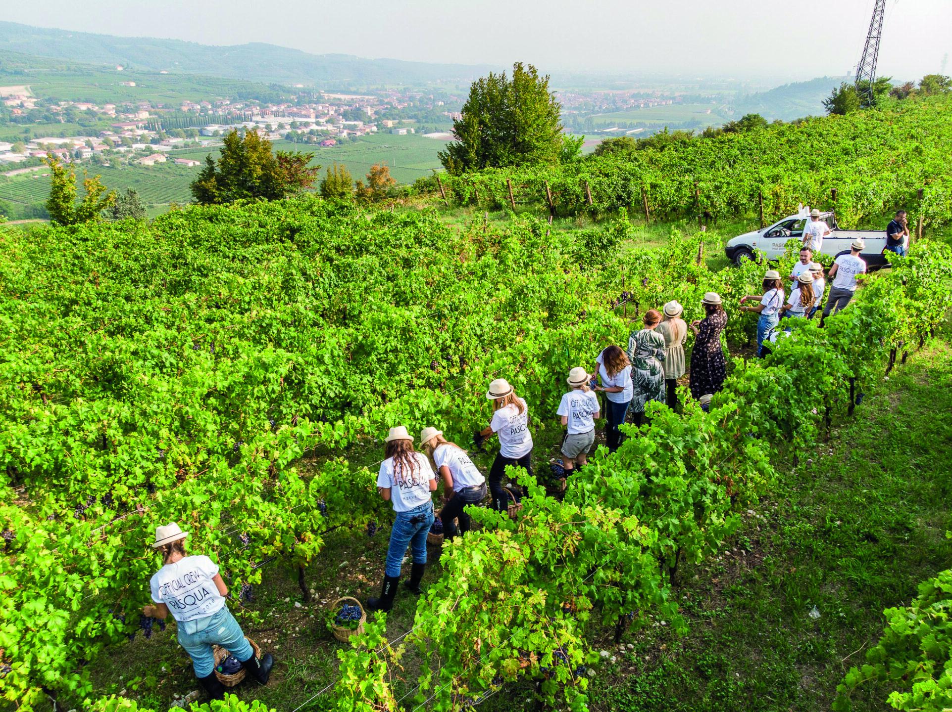 Migliori vini italiani: Pasqua tra le 100 Eccellenze Italiane per Forbes