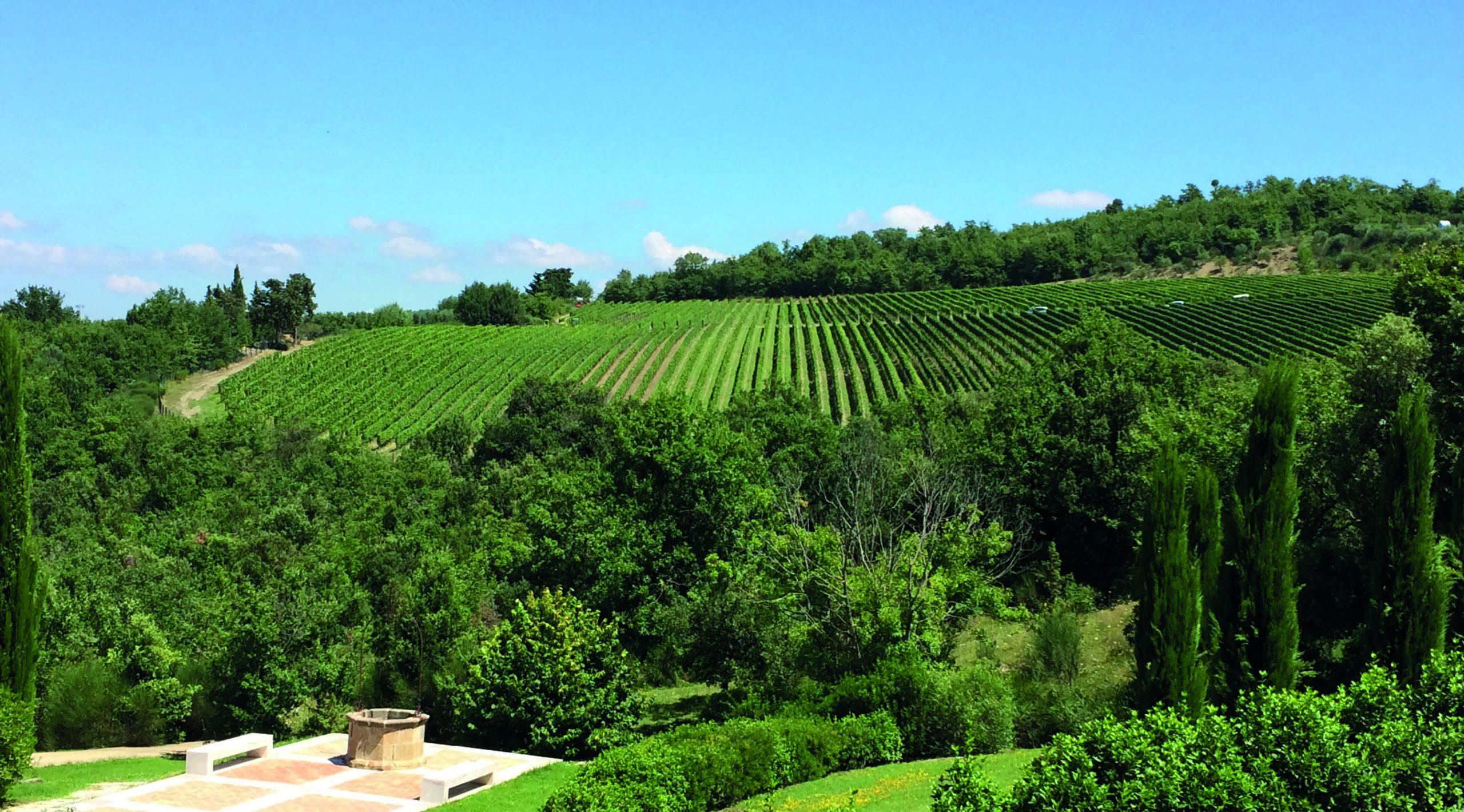 Migliori vini italiani: Podere Forte tra le 100 Eccellenze Italiane di Forbes