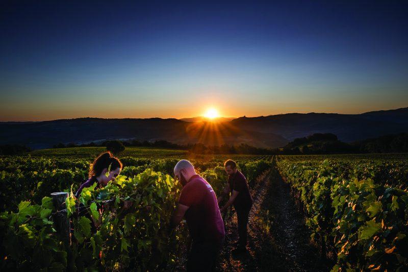 Migliori vini italiani: San Polo tra le 100 Eccellenze Italiane per Forbes