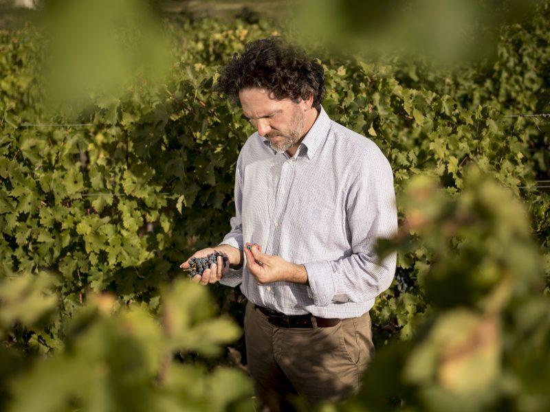 Migliori vini italiani: Ornellaia tra le 100 Eccellenze Italiane per Forbes