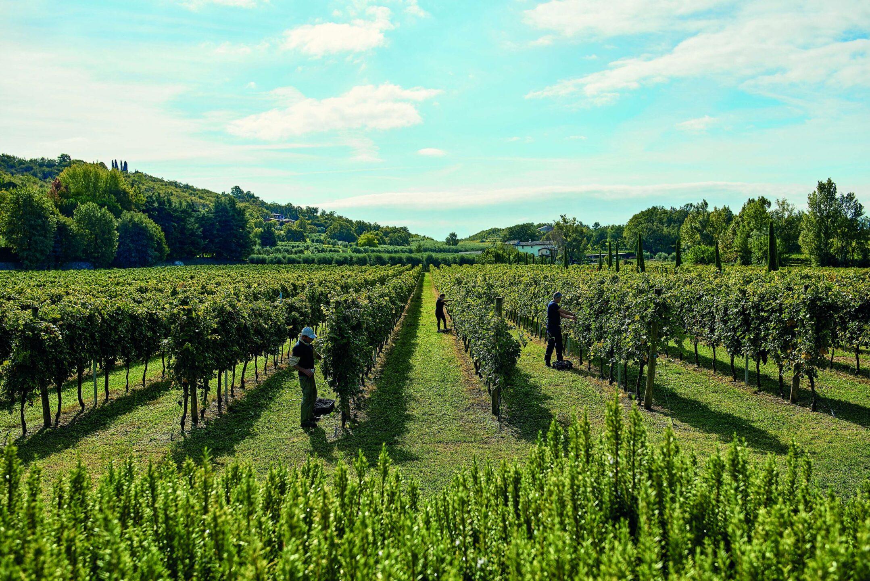 Migliori vini italiani: Cantine Tinazzi tra le 100 Eccellenze Italiane selezionate da Forbes