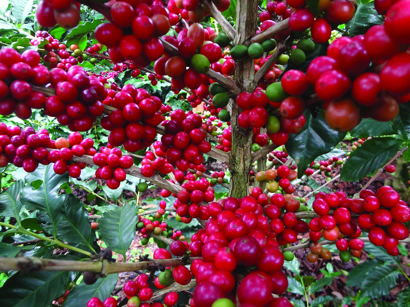 Migliori prodotti italiani: Le Piantagioni del Caffè tra le 100 Eccellenze Italiane per Forbes
