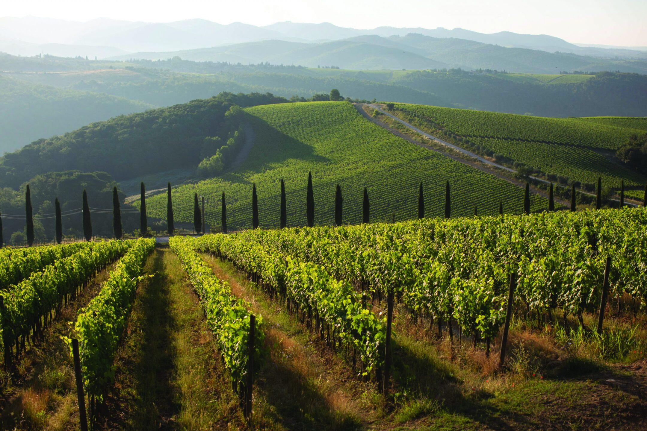 Migliori vini italiani: Dievole tra le 100 Eccellenze Italiane per Forbes