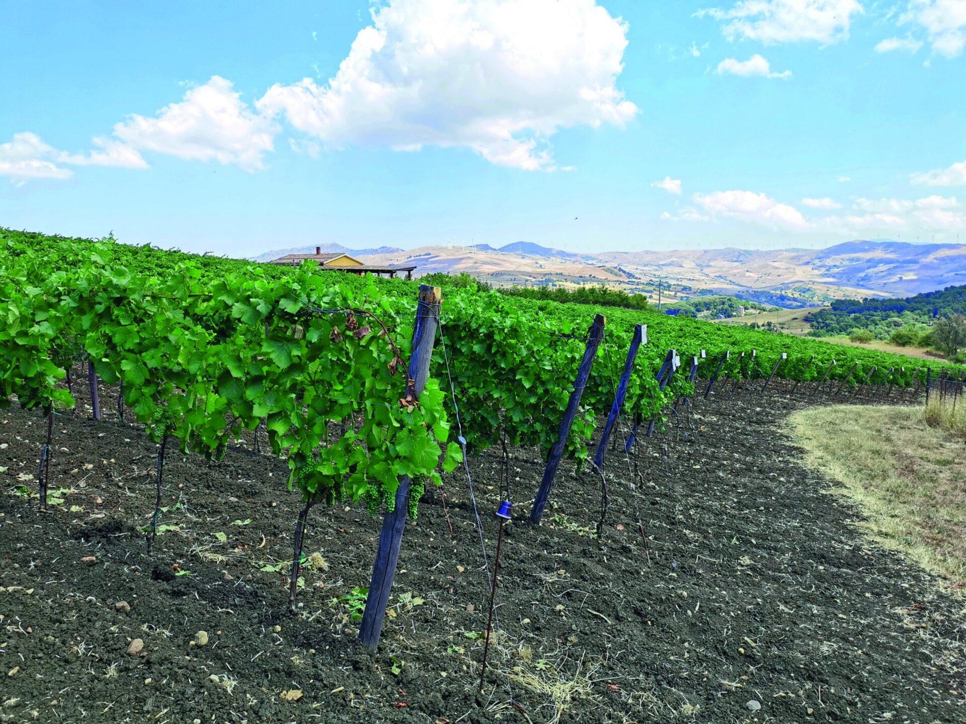 Migliori vini italiani: Tenuta San Giaime tra le 100 Eccellenze Italiane di Forbes