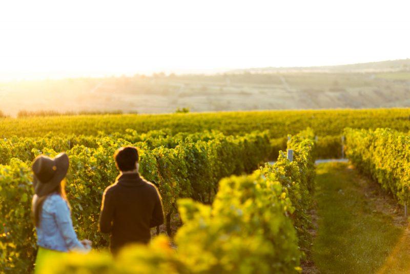 Perlage Winery, il leader del prosecco biologico diventato società benefit