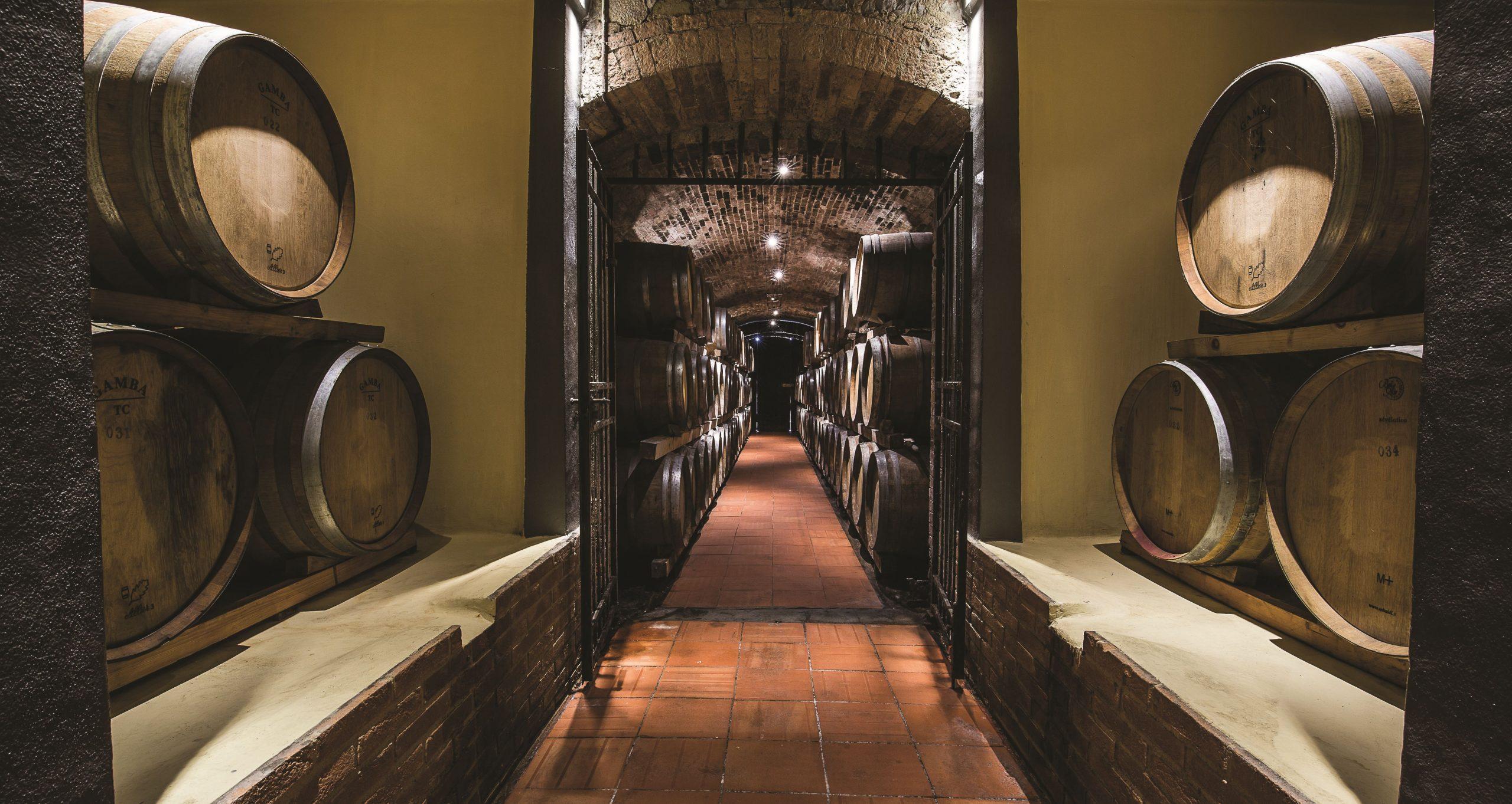 Migliori vini italiani: Cantine Piccini tra le 100 Eccellenze Italiane di Forbes