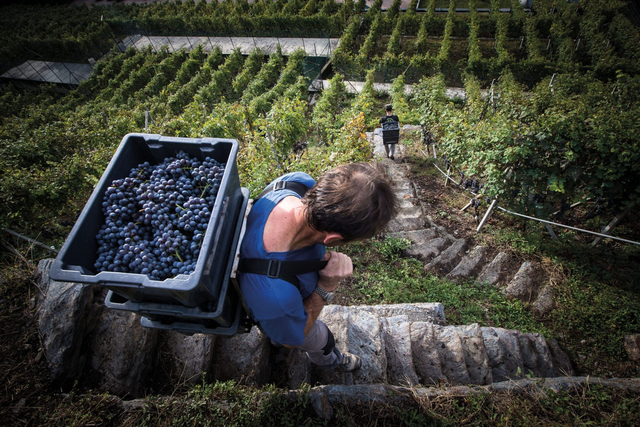 Migliori vini italiani: Arpepe tra le 100 Eccellenze Italiane per Forbes