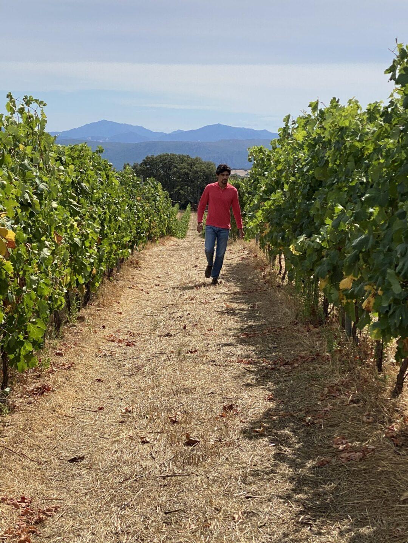 Mark Hartmann, titolare di Sa Raja, tra le sue vigne (