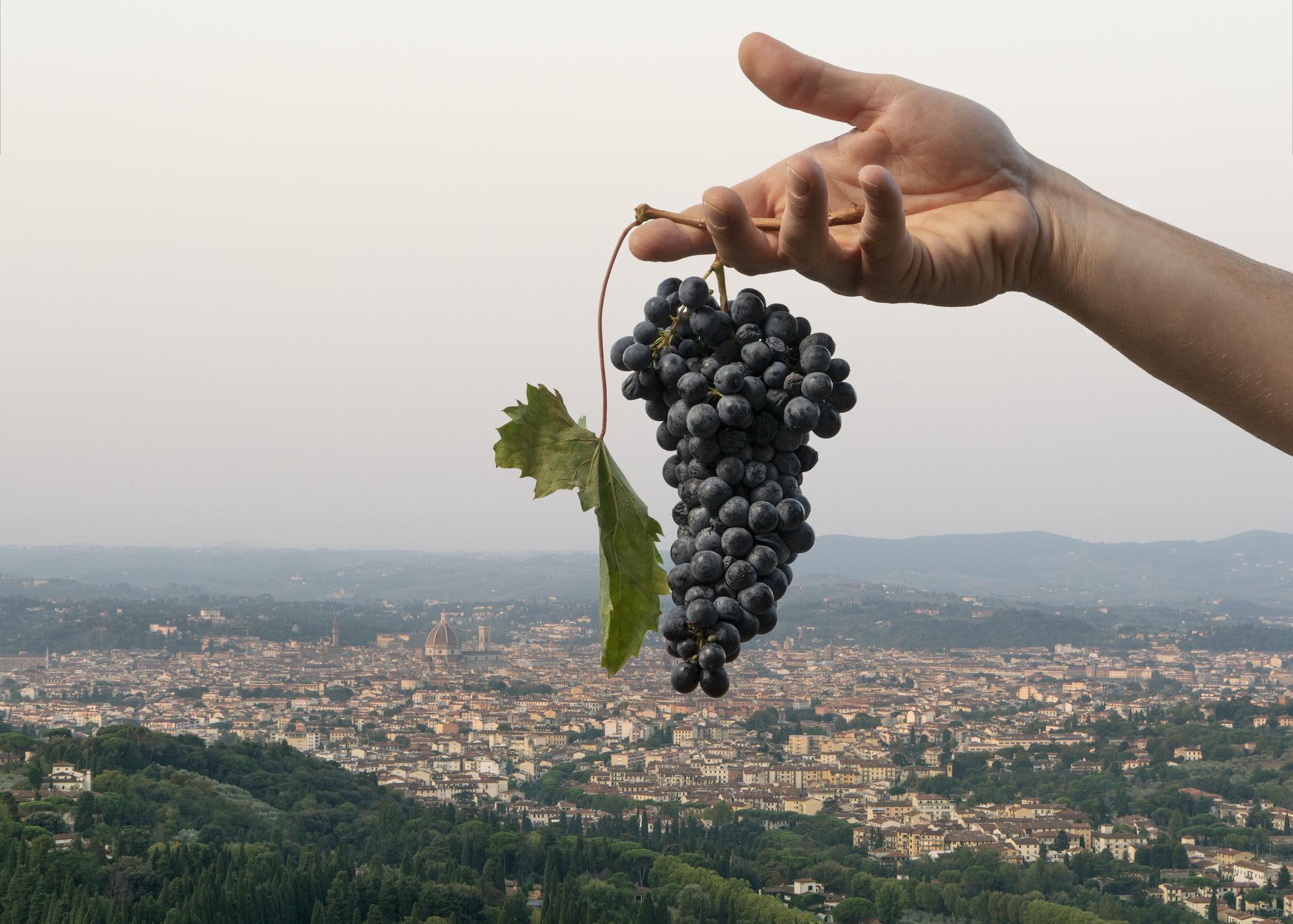 Grappolo d'uva dalla cantina di Bibi Graetz a Fiesole