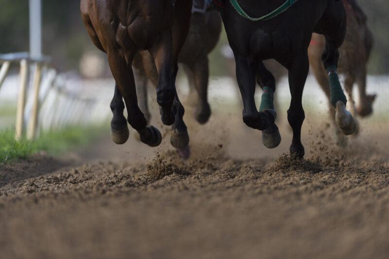 Bfc Media lancia Equos, il settimanale dedicato al mondo dei cavalli