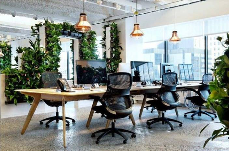 Biophilic workplace: uffici green