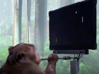 Scimmia Elon Musk Pong