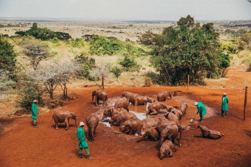 elefanti orfani